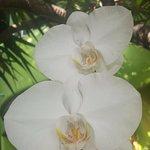 Orquídeas y otras variedades de flores y plantas por todas partes.