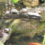 Photo of Amazon World Zoo Park