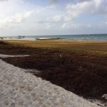 Seaweed at Bavaro on July 14, 2017. It improved over the next few days.