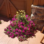 These beautiful flowers are on the patio ! lovely
