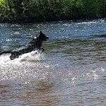 Great swimming spots for dogs