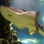 Sea Life Ray