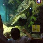 Sea Life Turtle