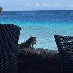 Photo of Plaza Resort Bonaire