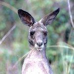 Foto de Jabiru Safari Lodge