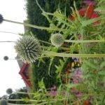 Botanic Gardens Foto