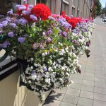 flowers outside Swans Brewpub
