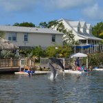 Photo of Dolphin Research Center