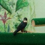 bird eating its food