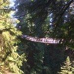 Foto de Parque y Puente colgante de Capilano