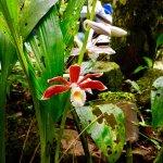 Photo de Borneo Dream Travel & Tours