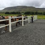 Laxnes' corral at the ranch