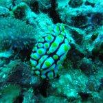 A nudibranch at Sail Rock