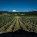 Serendipity Winery