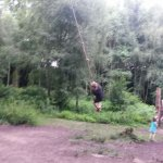 Woodland Trail Swing