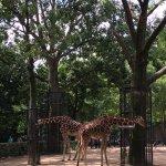 ARTIS Amsterdam Royal Zoo Foto