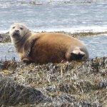 Seals Ytri tenga beach