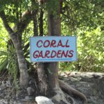 Photo of Coral Gardens