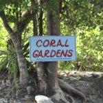 Coral Gardens Photo