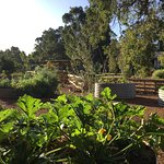 Our organic permaculture kitchen garden