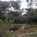 Little pond area
