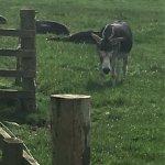 Sunbathing donkeys