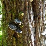 Fungi - tree is dead!