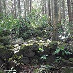 Lovely forest with ruins dotted around