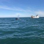 Gentle Giants Whale Watching Foto