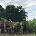 Foto di Elephant Nature Park