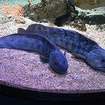 Photo de Aquarium La Rochelle
