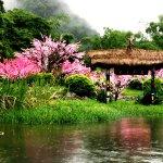 Fke peach flower blossom