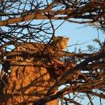 Photo of Okonjima Game Reserve