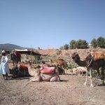 Photo de 4X4 Camel - Private Day Tours
