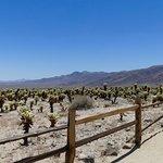 Cactus, cactus everywhere