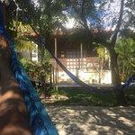 View from hammock garden