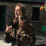 Falcon information