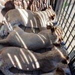 Photo de Ukutula Lion Park