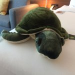 Backordered when I was there, these sea turtles are $29 (some goes to charity).