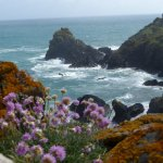 Sea thrift and lichens add colour to the scene