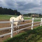 Equita Ranch