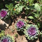 Some desert flora