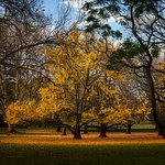 The last of the Ginko species, plenty other trees for your enjoyment too.