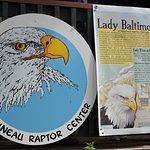 "Resident Bald Eagle ""Lady Baltimore"""