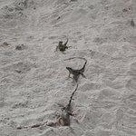 Photo de Cayman Turtle Centre: Island Wildlife Encounter