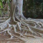 More interesting tree roots