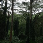 Photo of Manoa Falls