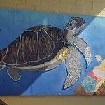 Photo of Sea Turtle, Inc.