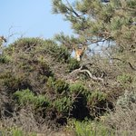 Horseback riding - Grover Beach- saw a coyote