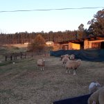 the animals on the farm add to the ambience and serenity